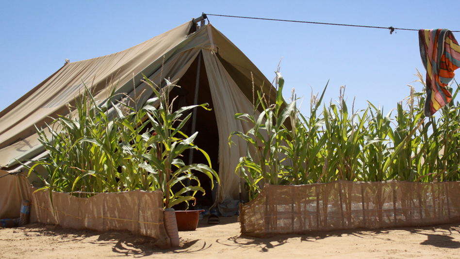 """Tunisia, Shousha camp. A self-arranged shelter"""